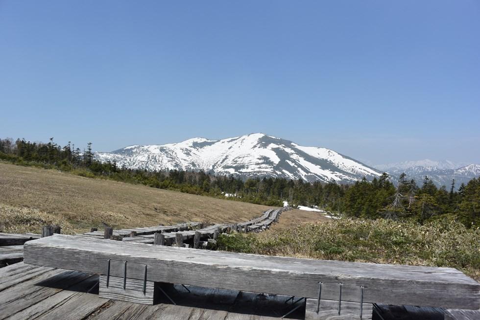 5月の尾瀬のアヤメ平